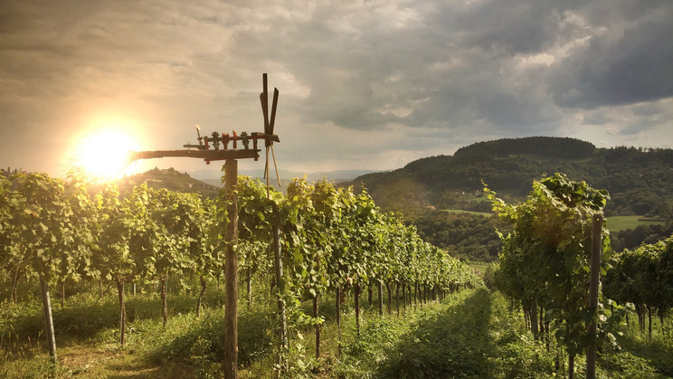 Abenstimmung in den Weinbergen mit Klapotetz | © PIXEL of the PEOPLE | shutterstock.com